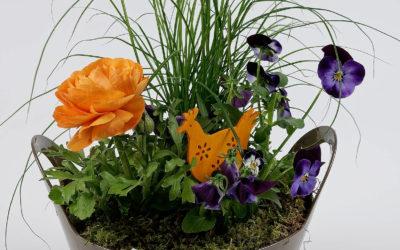 Des fleurs en pot à Woerth