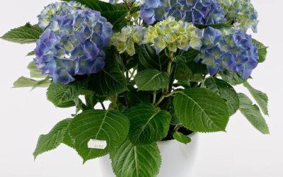 Comment choisir ses plantes d'extérieur à Woerth ?