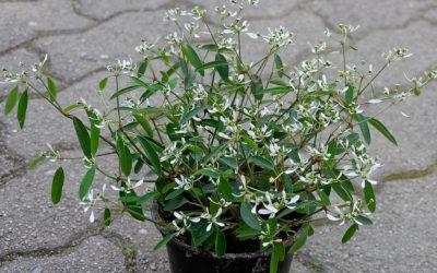 Choisir ses plantes vertes à Woerth