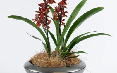 Choisir ses orchidées à Woerth