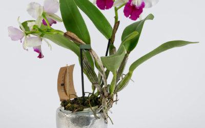 Des fleurs : une belle idée cadeau fête des grands-mères à Woerth