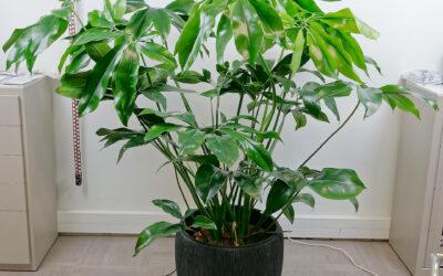 Agrémentez votre maison avec des plantes d'intérieur à Woerth