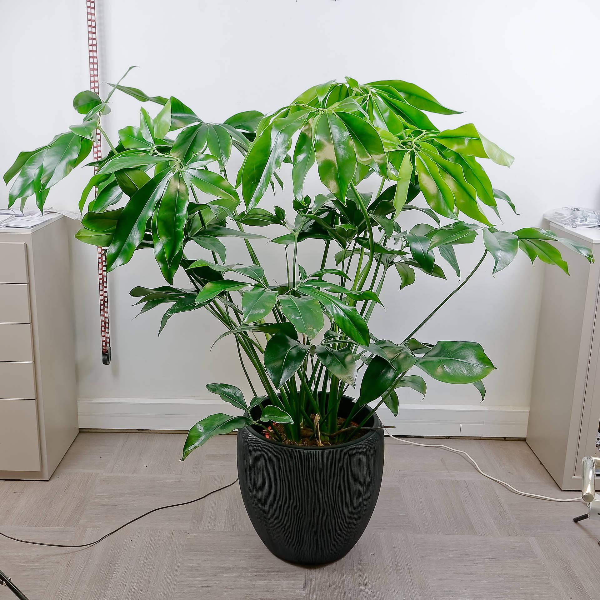 plantes d'intérieur à Woerth